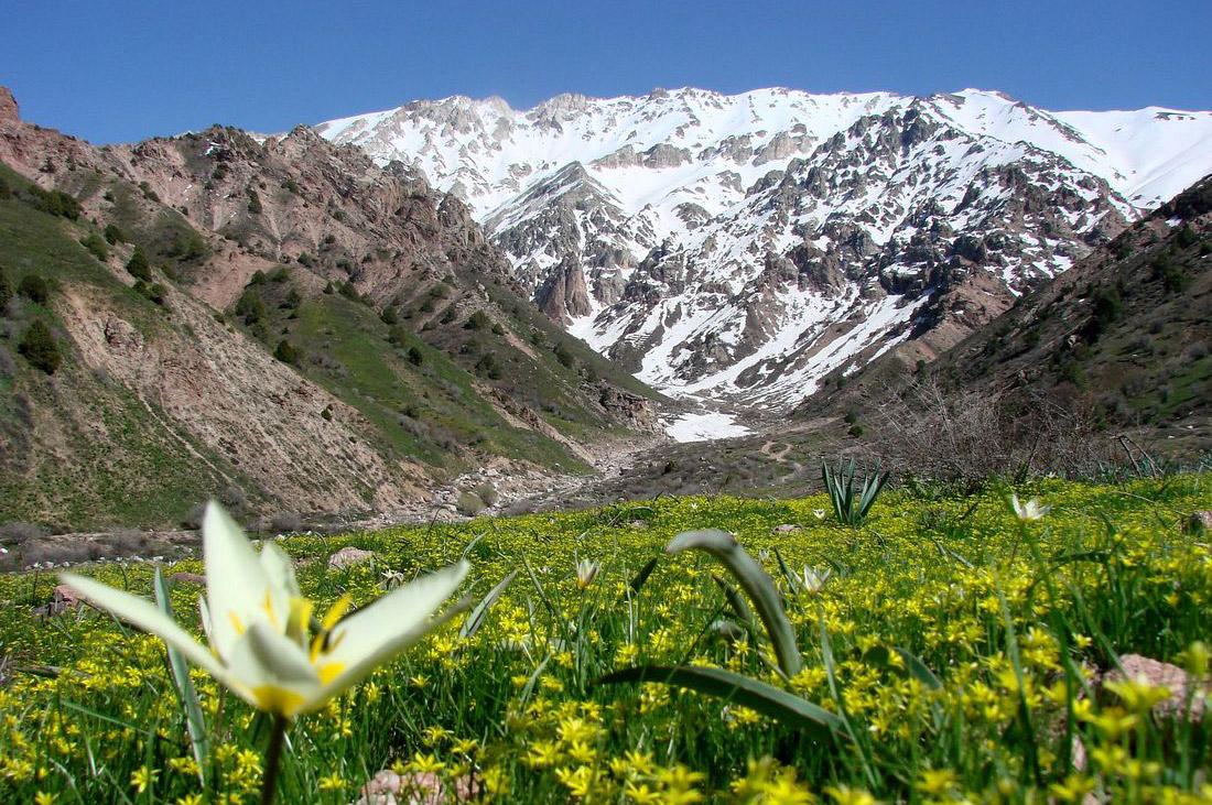 »Frühlingserwachen an der Seidenstraße« – Botanische Traumreise Usbekistan – April 2016